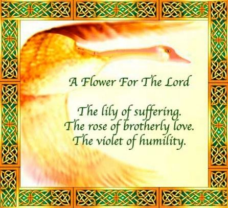 Daily Rhema - A Flower for the Lord