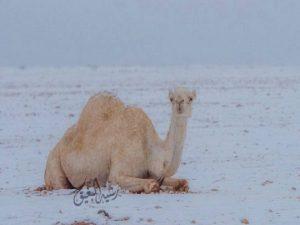 snow-desert-saudi-arabia-1